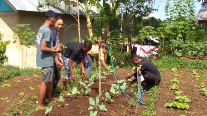 Para peserta belajar menanam sayuran organik pada bedengan yang telah disiapkan