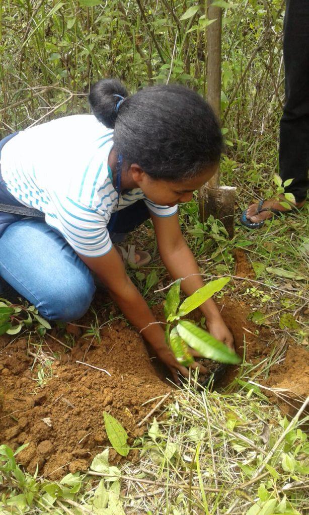 Menanam anakan pohon di area konservasi