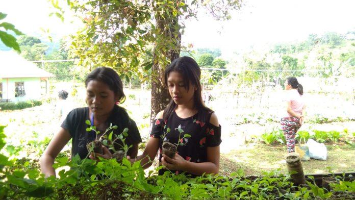 Belajar mempersiapkan benih tanaman